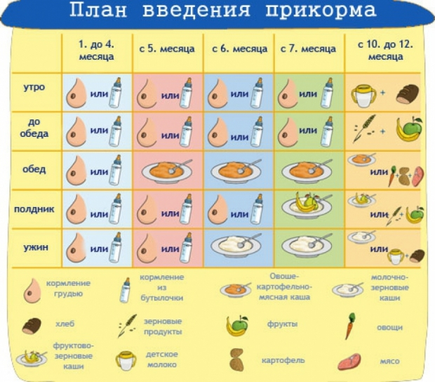план введения прикорма