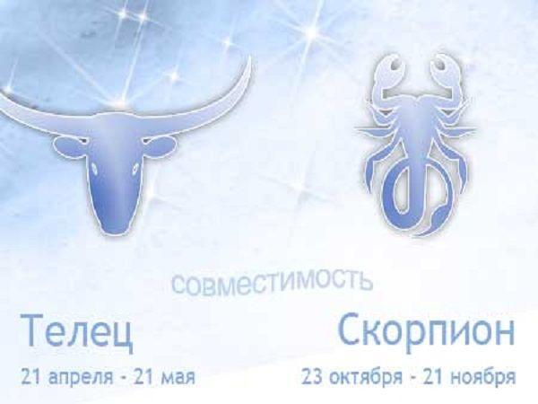 Совместимость знаков зодиака скорпион и телец