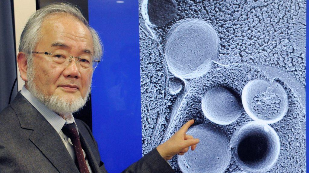 Японский биолог Ёсинори Осуми